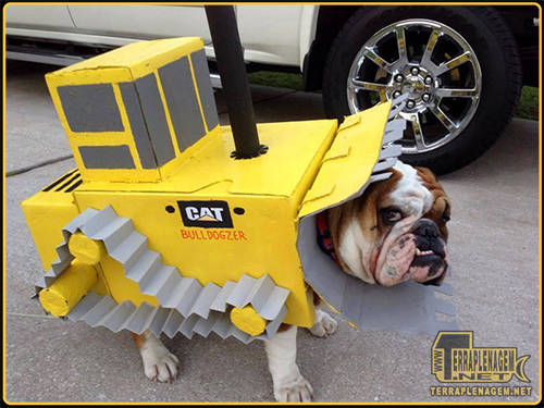Bulldozer Dog ou Bulldogzer